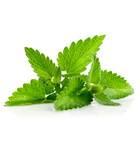 Mint Essential Oil Natural & Pure -- 10 Gram Bottle